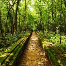 シェイン・マ・カー自然保護区のご紹介